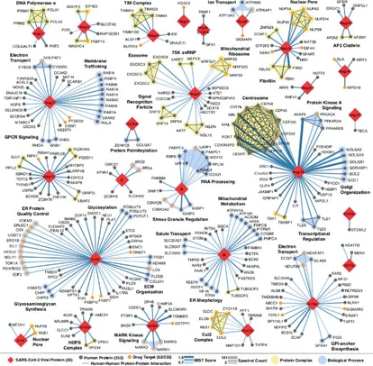 Every place that a coronavirus protein interacts with a human protein is a potential druggable site....