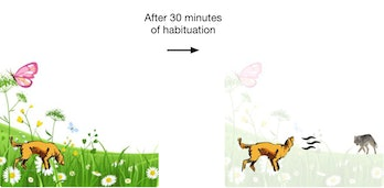 dog habituation