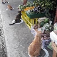 Viral social distancing photo spotlights an enduring cat mystery