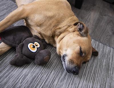 Hear Doggy! Flattie Ultrasonic Squeaker Dog Toy