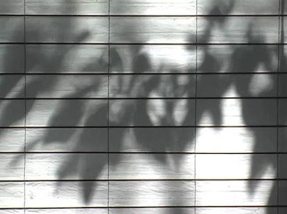 Wind-animated foliage shadows cast on a sun shade.