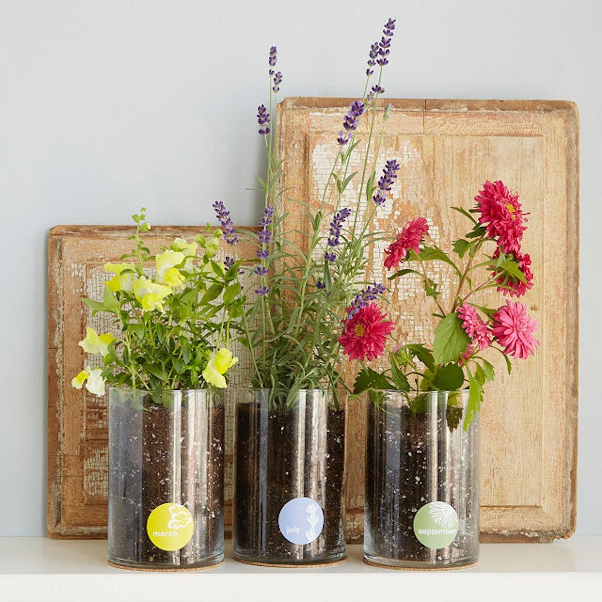 Uncommon Goods Birth Month Flower Kit