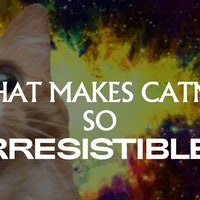 Catnip's surprising evolutionary history