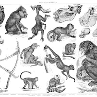 Animal evolution explains why social distancing is so difficult