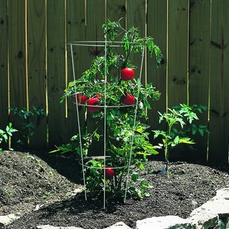 Panacea Products 89723 Tomato and Plant Support Cage
