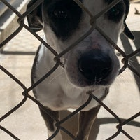 Covid-19 is affecting shelter dogs — for better and for worse