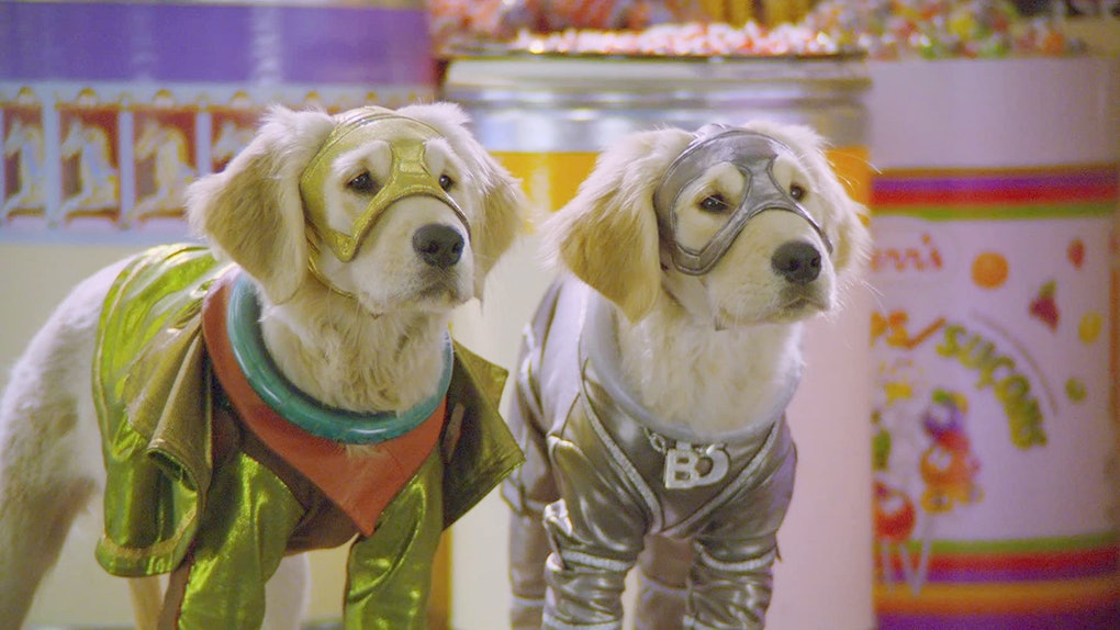 Here's how to win $1,000 by watching dog movies like 'Super Buddies.'