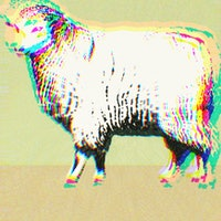 """Sheep-on-ketamine study reveals what happens when you fall into a """"k-hole"""""""