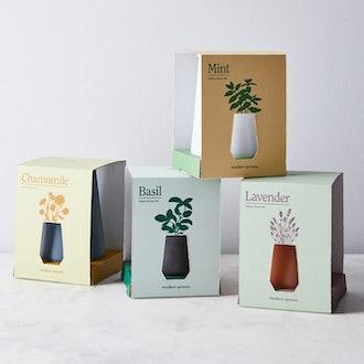 Smoked Glass Garden Grow Kit (Set of 4)