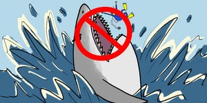 5 most common shark myths: BUSTED