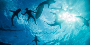Sharks are all around us. Scientists explain why we don't need to fear.