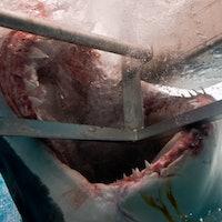 Sharksploitation movies get 1 thing right that Jaws got wrong