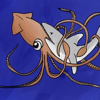 First photo evidence of shark vs. squid fight helps explain an age-old myth