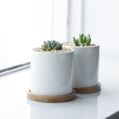Greenaholics Succulent Plant Pots (Set of 2)