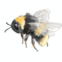 Biohacking nature with Brood IX, bumblebees