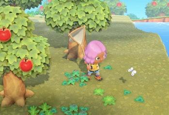 Animal Crossing New Horizons Bug Catching
