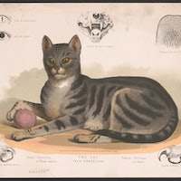 Cats chose humans very early: Archaeological testing has upended a common historical principle