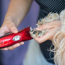 best dog grooming clippers