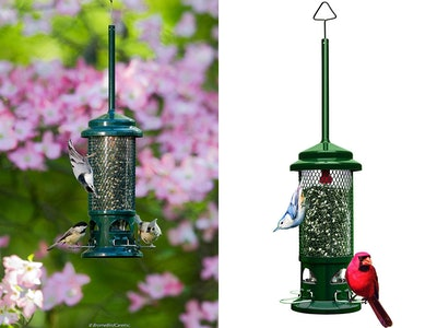 Brome Squirrel Buster Standard Bird Feeder