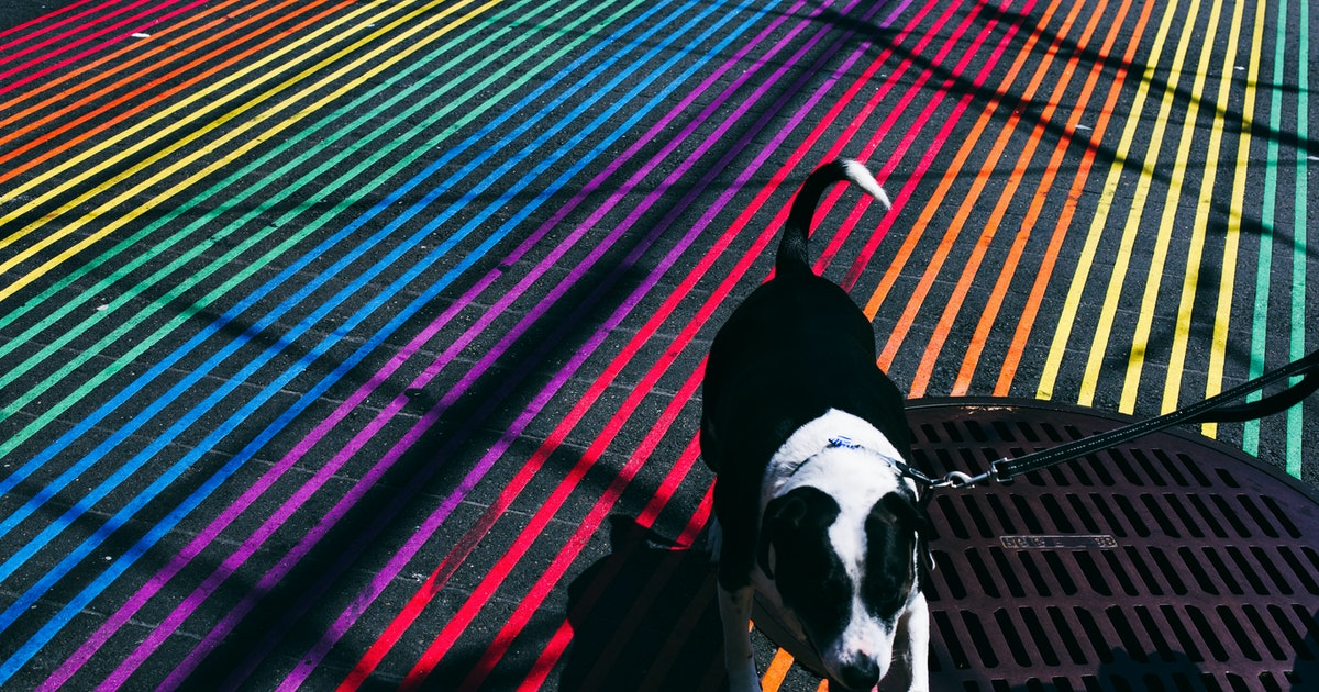 Do dogs really see in just black and white?