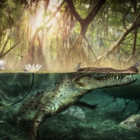 Millions of years ago, crocodiles surfed from Africa to the Americas — study