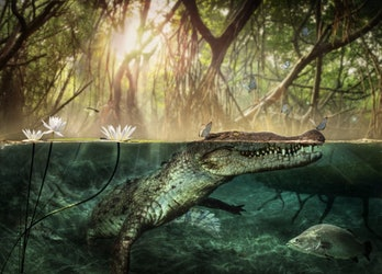 ancient crocodile partially submerged in water