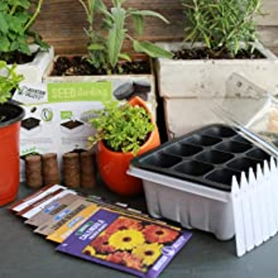Mountain Valley Seed Company Herbal Tea Starter Kit