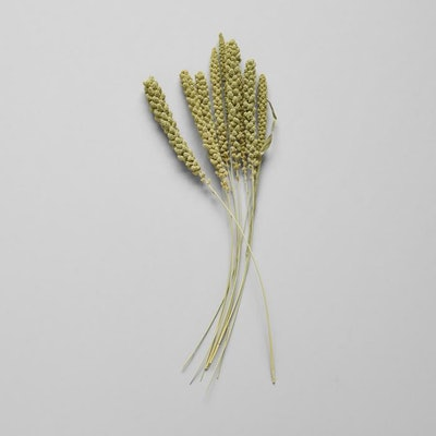 Dried Spray Millet