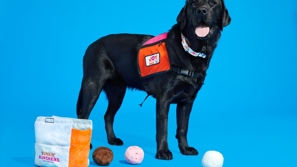 Here's where to get BARK x Dunkin' dog toys