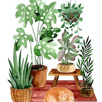Pet-friendly houseplants: 5 that are safe, 5 to avoid
