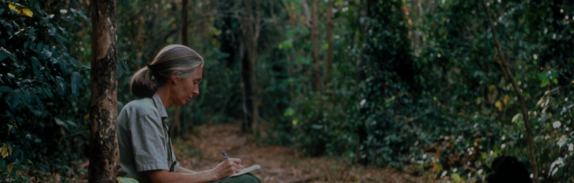 Scientist Jane Goodall studies the behavior of a chimpanzee during her research February 15, 1987 in...