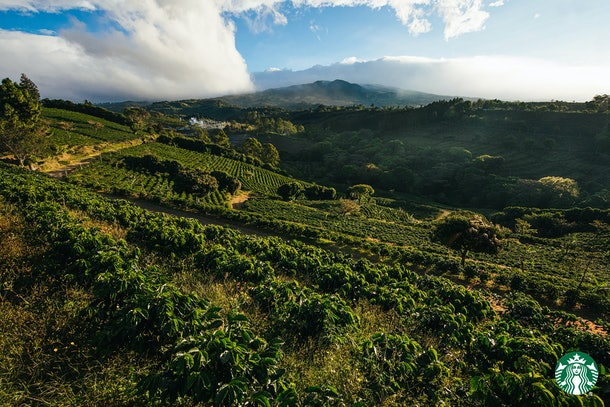 Starbucks Zoom backgrounds virtually take you to overseas locations, including the company's coffee farm.