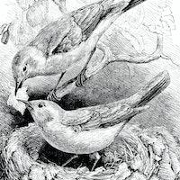 Images reveal 5 scientifically amazing bird nests