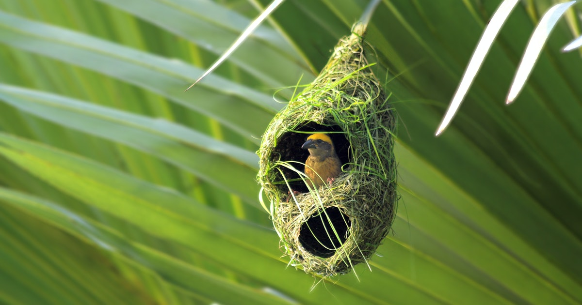 5 best nests: Images reveal innovative bird homes