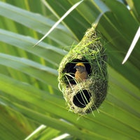 Images reveal 5 scientifically amazing bird nests