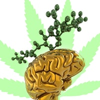 """The """"anti-social stoner"""" stereotype has a scientific explanation, finds new study"""
