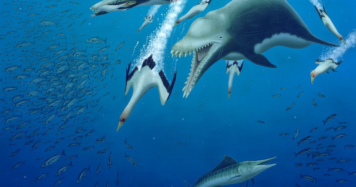 15-foot-long skeleton reveals 23-million-year old apex predator