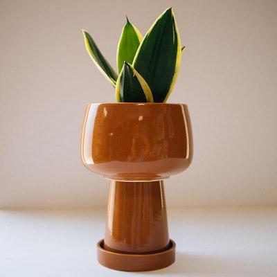 Kaya 3-Piece Ceramic Planter by Justina Blakeney
