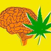 How marijuana really affects the brain