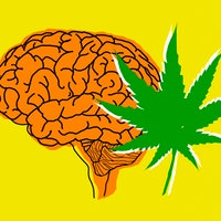 How marijuana really affects the brain