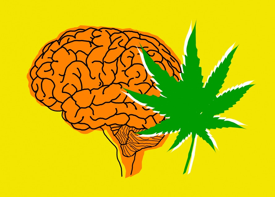 Human brain and cannabis leaf.