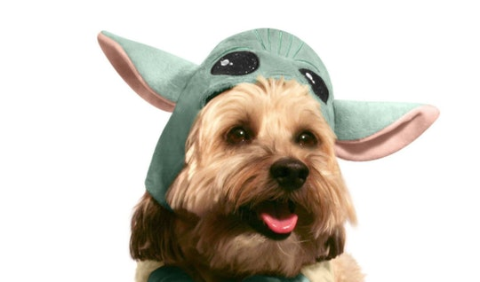Dog in Baby Yoda Pet Halloween Costume From Petsmart