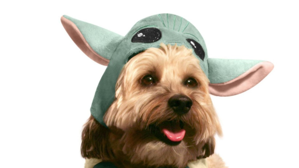 Halloween 2020 Dogs PetSmart's Halloween 2020 Costumes For Dogs & Cats Are Scary Cute