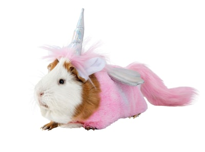 Guinea Pig Unicorn Costume