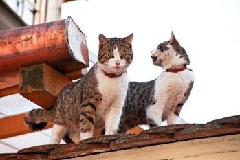 Two cats on a house roof.