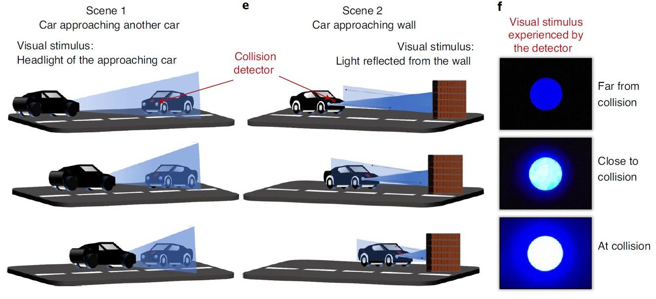 https://imgix.bustle.com/uploads/image/2020/8/24/9de31cad-d5a2-4bc9-ba0b-265284518907-toy-car-vision.PNG