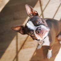 Pet science: The truth about cats and dogs