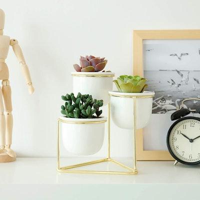 Potey Ceramic Succulent Planter Pots (3-Pack)