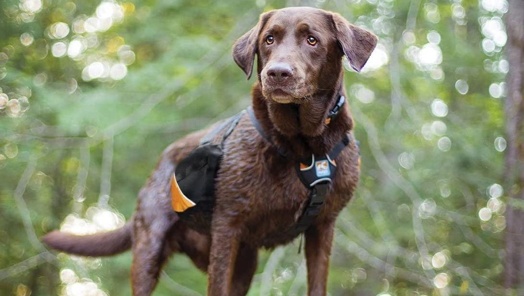 best dog harnesses for hiking
