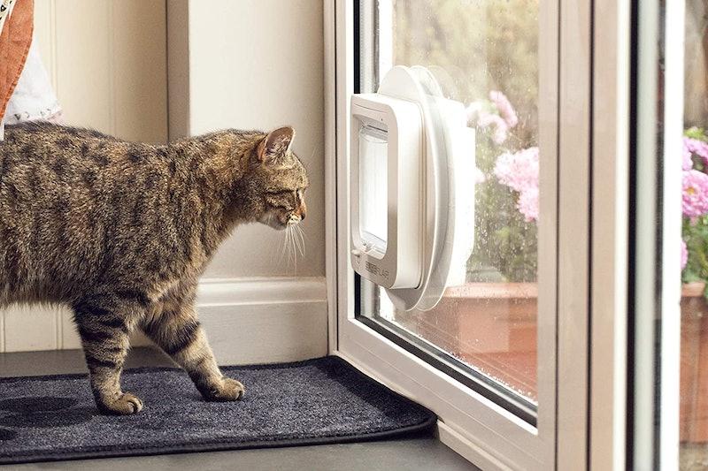 Best Microchip Cat Doors